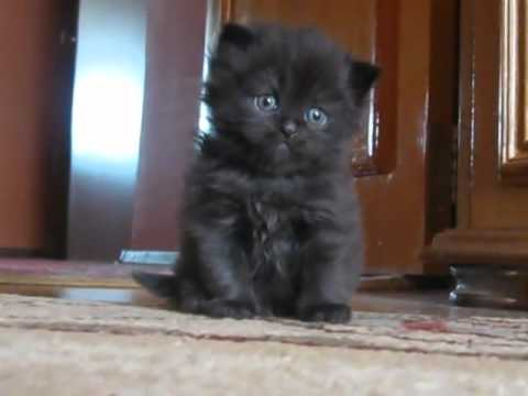 Cute kitten is sad
