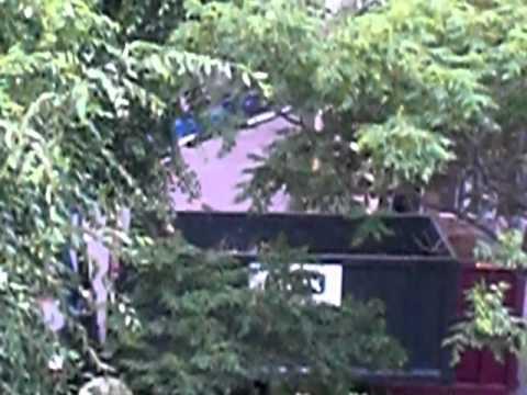Tala de arboles en el Gornal, los vecinos indignados