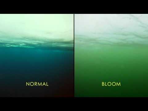 La NASA encuentra inesperado bloom de fitoplancton en el Océano Ártico