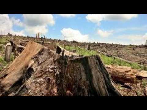 Desde la Torre - Deforestación