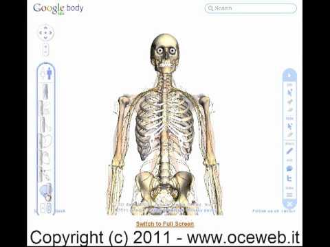 Esplorando il corpo umano... con Google