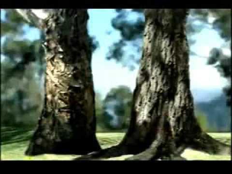 La deforestación; Acciones para cuidar el medio ambiente