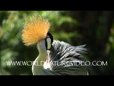 Bali bird park with beautiful bird, Nature Video Stock Footage_0597