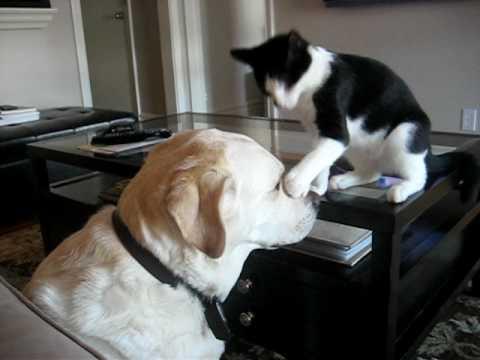 Кошка по-шуточному дерется с собакой