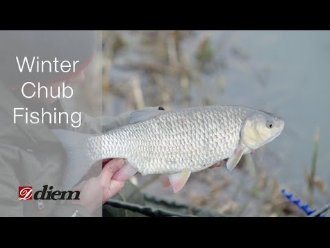 Big chub fishing in the winter with Diem
