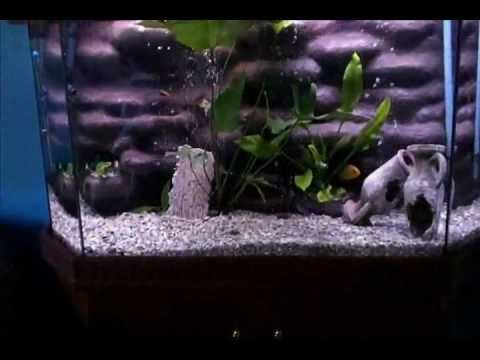 3D Background Aquarium - African Cichlid, Malawi Lake - 90 Gallons