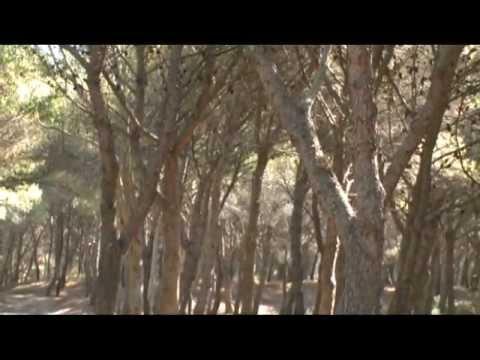 Foreste d' Italia