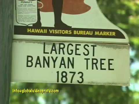 LARGEST BANYAN TREE, LAHAINA, MAUI,HAWAII