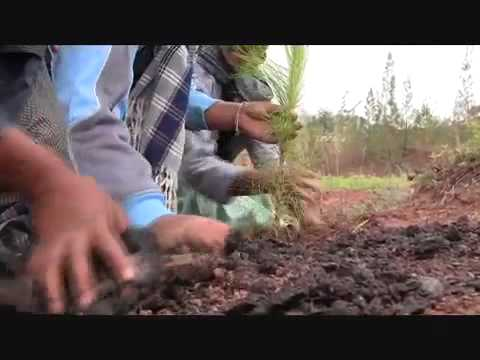 Inicia Gabino Cué Campaña de Reforestación 2011 en la Mixteca