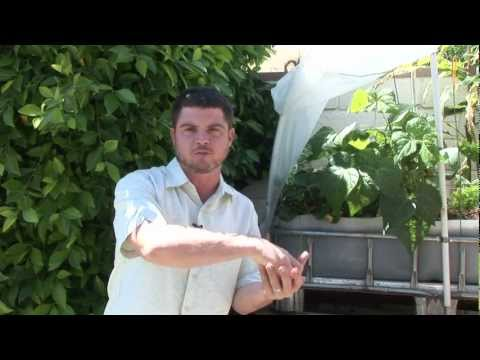 1) What is Aquaponics? - New Streams Aquaponics