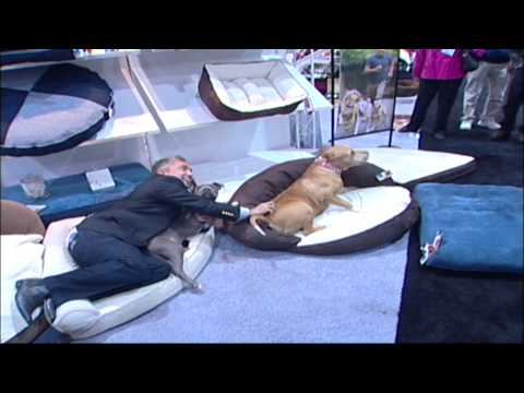 Cesar Millan and Daddy at the Global Pet Expo 2008....Video only no interview low volume....