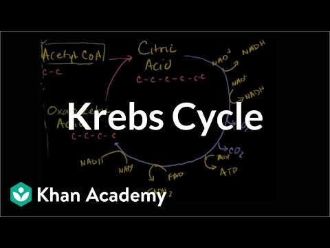 Krebs / Citric Acid Cycle