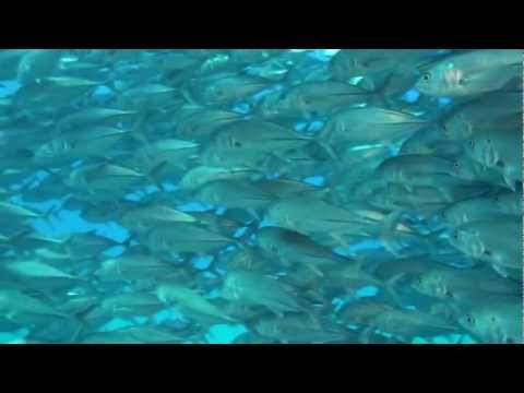 Nurkowanie Morze Korteza