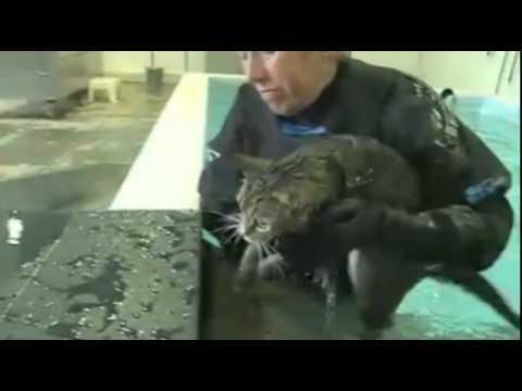 Swimming cat Mog on evening news! - 15/6/11