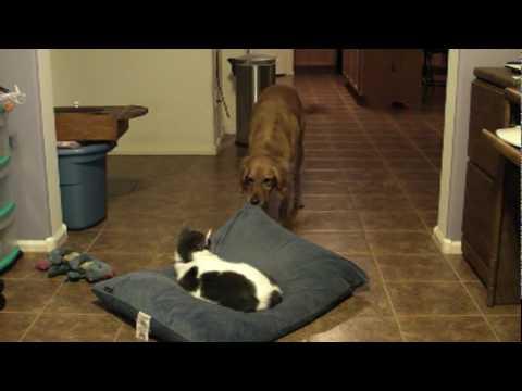 Get Off My Bed, Cat!