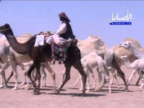 منقية مطلق محمد صالح البغيلي  - قناة الاصايل alasayel tv