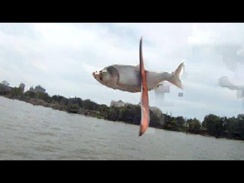 فيديو: أمريكان يصطادون السمك بطرق غريبة