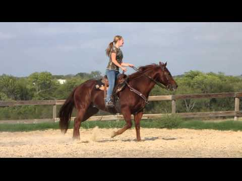 Doc Star Appeal - riding lesson - loping barrels - Valley View Ranch