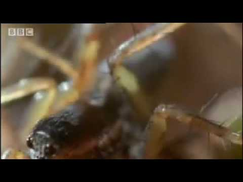 Amazing miniature world - Sir David Attenborough's Life in the Undergrowth - BBC wildlife