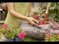 Цветы растут, как на ДРОЖЖАХ/Подкормка комнатных растений