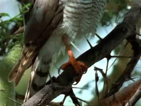 NATURALEZA-FAUNA-FLORA-Africa el Paraiso del Espino-National Geographic-3