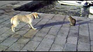 犬にケンカうられても全く動じない猫。達観状態