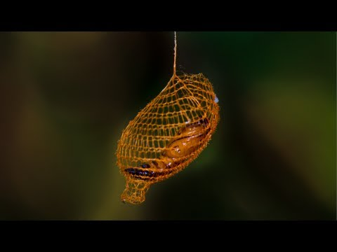 Nature's 3D Printer – Cocoon in Rainforest