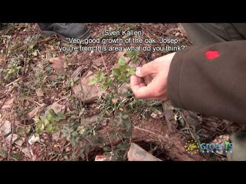 (English subtitles) Reforestación Proyecto Life  'Desiertos Verdes' con Universidad de Valladolid
