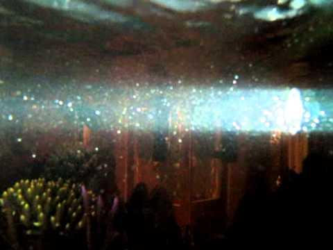 zooplancton et larves chrysiptera hemicyanea/ zooplancton and chrysiptera hemicyanea fry