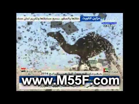 منقية منير محمد الغصاب الثوري السبيعي في مزاين الكويت 2014