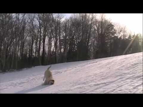 Pas koji je voleo snegove :)