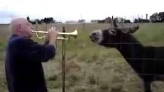 トランペットの音楽に熱狂するロバ。かわいすぎる