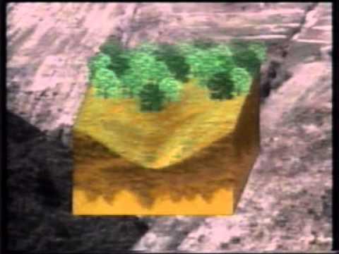 Los bosques - Desforestacion.mpg