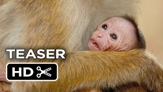 Monkey Kingdom Official Teaser #1 (2015) - Disneynature Documentary HD