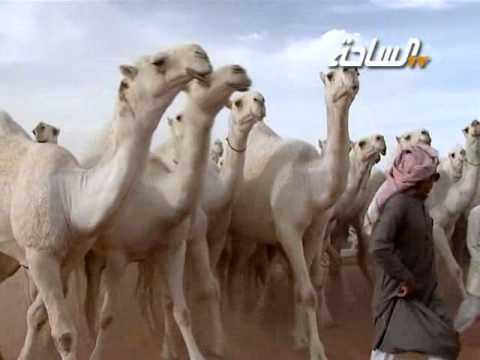 جديد_الساحة 1436 | طياحات | مسيرة منقية / محمد بن مصلح بن عبيريد المطيري