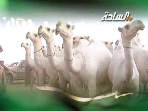 #جديد_الساحة 1436 | الجلاويات | مسيرة منقية / لفاء بن ملفي الجلاوي العتيبي