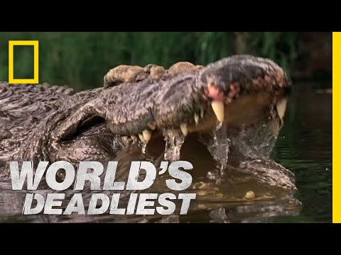 World's Deadliest - Crocs Kill with Strongest Bite