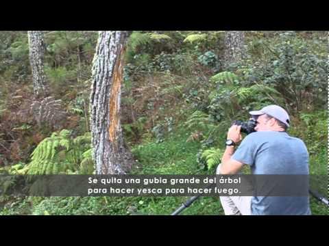Corte de los bosques de Haití