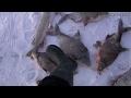 Словил браконьерскую сетку на крючок! Смотреть до конца! Рыбалка на льду