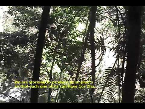 Palmeros de la Sierra Madre de Chiapas CAP I