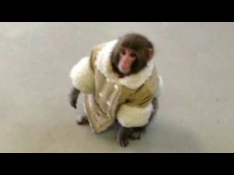 Watch Whatever happened to that IKEA monkey?