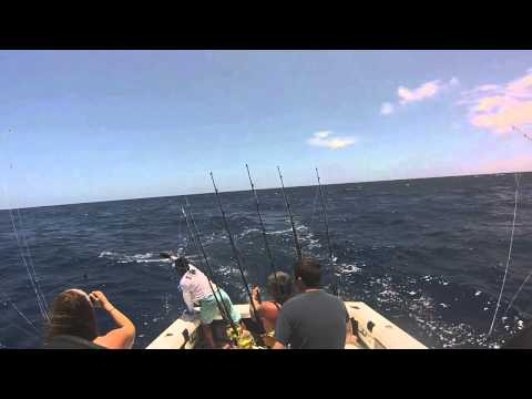 Wetass ll released blue marlin