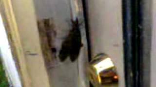 Giant creepy bug.3gp view on youtube.com tube online.