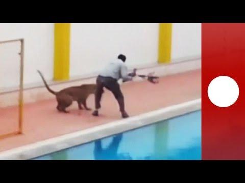 Un leopardo ingresó a una escuela y atacó a cinco personas