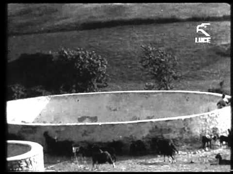 Paesaggi di Capitanata - 1929