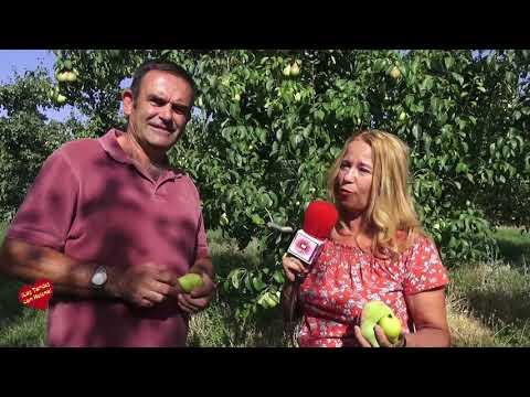 Visita a los campos de árboles frutales de Calatayud
