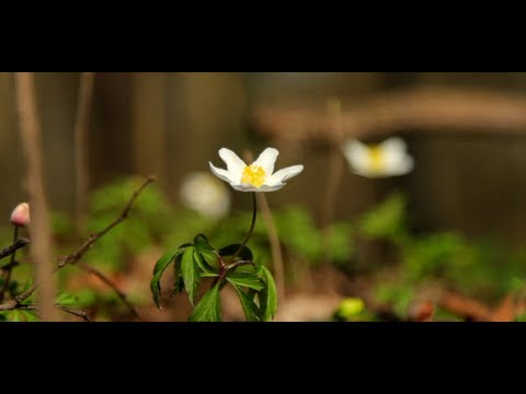 Beautiful Spring: Canon 5D Mark III - Short Film