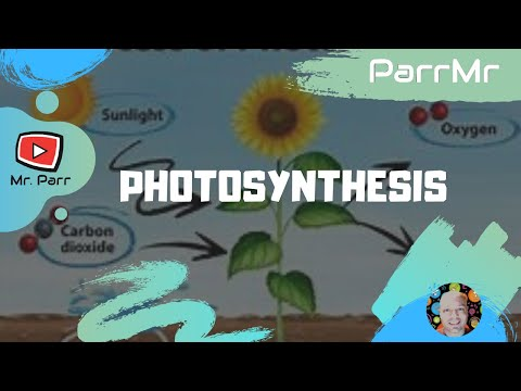 Photosynthesis Song