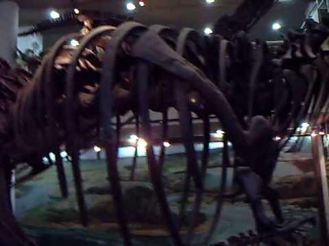 Paleontologia 1