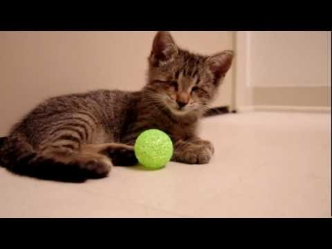Oskar the Blind Kitten and His First Toys